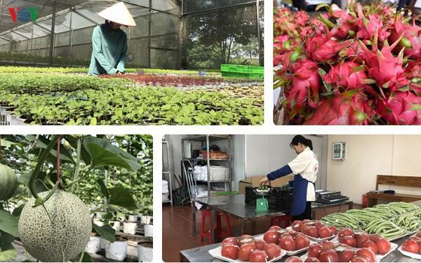 Dịch Covid 19: Vấn đề tiêu thụ nông sản ở thị trường trong nước (14/2/2020)