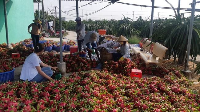 Dịch Covid -19 và giải pháp cho nông sản Việt (13/2/2020)