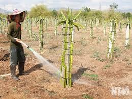 Giải pháp tiết kiệm nước sản xuất trong mùa khô (25/3/2020)