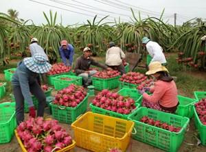 Thúc đẩy phát triển sản xuất nông nghiệp thời dịch bệnh (20/3/2020)