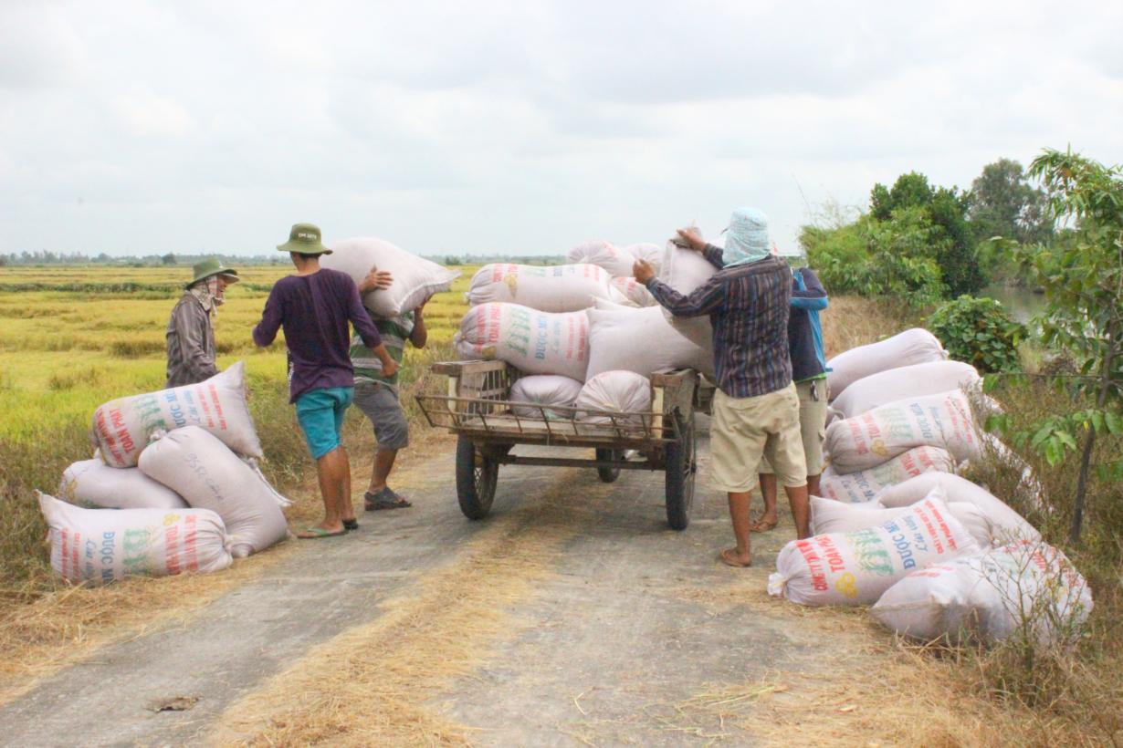 Bà con nông dân và các doanh nghiệp Cần Thơ rất vui vì được xuất khẩu gạo trở lại trong tháng 4 (12/4/2020)
