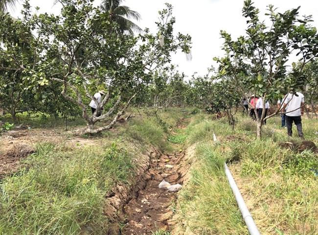 ĐBSCL: Khẩn trương khắc phục vườn cây ăn trái sau hạn mặn (16/6/2020)