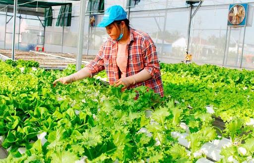 Phát triển nông nghiệp hiện đại: Cần thúc đẩy phát triển chuỗi liên kết giá trị (30/6/2020)