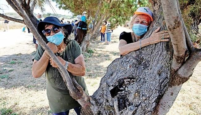 Chiến dịch ôm cây, chia sẻ tình cảm trong mùa Covid- 19 tại Israel(16/07/2020)