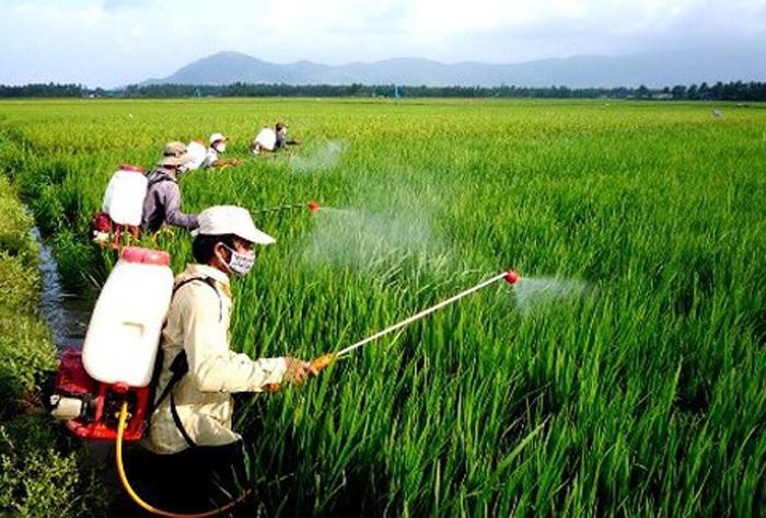 Hạn chế thuốc bảo vệ thực vật để có sản phẩm an toàn (30/7/2020)