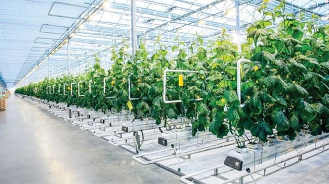THỜI SỰ 6H SÁNG 19/1/2021: Thủ tướng Chính phủ quyết định thành lập Khu nông nghiệp ứng dụng công nghệ cao Thái Nguyên