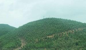 Thoát nghèo nhờ trồng rừng vừa phát triển kinh tế vừa ứng phó với biến đổi khí hậu Quảng Ninh (10/09/2020)