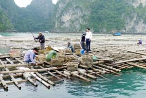 Nhân rộng mô hình điểm phát triển sản xuất tại Quảng Ninh (15/10/2020)