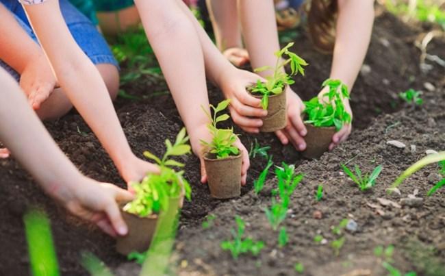 Bảo vệ rừng và trồng mới 1 tỉ cây xanh (14/11/2020)