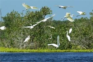 Khu dự trữ sinh quyển thế giới – thúc đẩy phong trào sống xanh (21/10/2021)