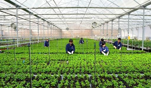 Động lực cho đổi mới mô hình tăng trưởng ngành nông nghiệp (21/02/2021)