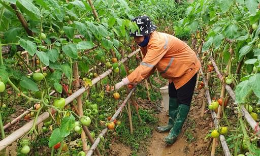 Sản xuất thực phẩm an toàn vì lợi ích người tiêu dùng (04/05/2021)