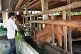 Phòng bệnh cho đàn vật nuôi từ đầu mùa nắng nóng. (27/04/2021)