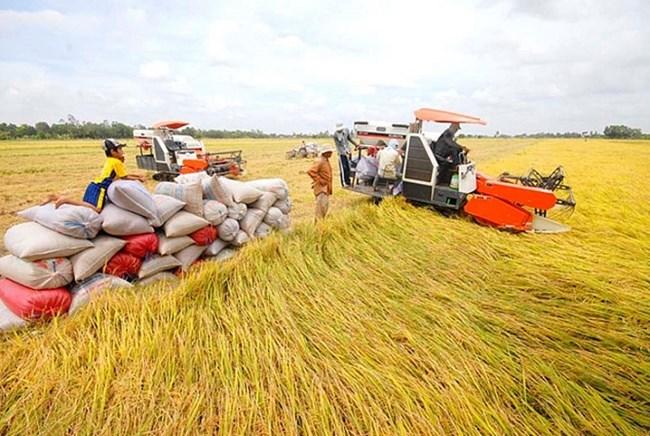 Nâng cao giá trị và thương hiệu lúa gạo Việt Nam (02/05/2021)