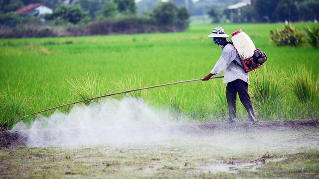 Phun thuốc trừ sâu thuê, nghề nguy hiểm (10/05/2021)