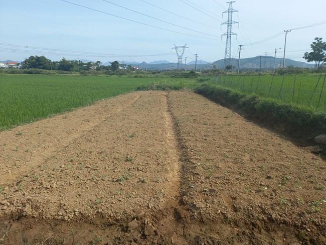 Đà Nẵng: Nắng nóng gay gắt, khó khăn sản xuất nông nghiệp (22/06/2021)