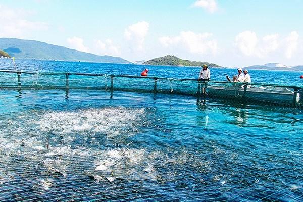 Khánh Hòa: Phát triển thủy sản theo hướng bền vững, trách nhiệm (03/06/2021)