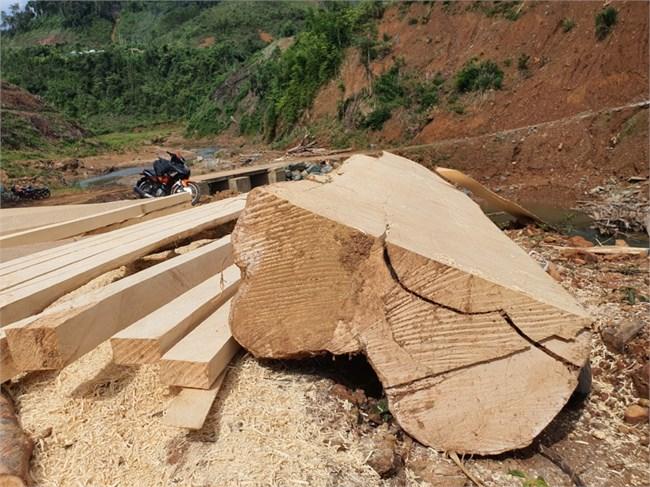 Thủy điện Tr'Hy 13 năm xây chưa xong, nhiều cây rừng bị chặt hạ (17/06/2021)