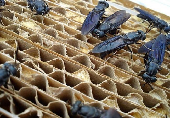 """Mô hình """"vườn ươm"""" côn trùng, bảo vệ mùa màng không dùng thuốc trừ sâu ở Pháp (15/07/2021)"""