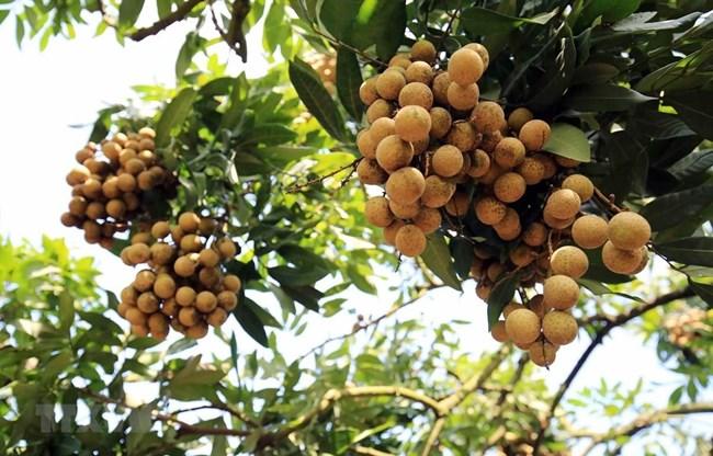 Tiêu thụ nông sản qua thương mại điện tử: chủ động để thành công ( 15/07/2021)