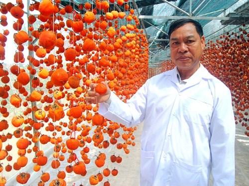 Người mang công nghệ Nhật về cho trái hồng Đà Lạt (14/7/2021)