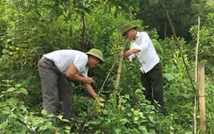 Những đảng viên làm giàu trên đỉnh Phia Khao, tỉnh Bắc Kạn (21/08/2021)