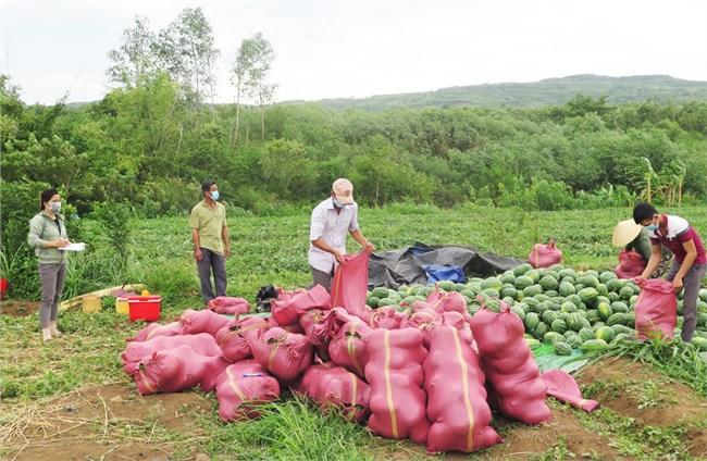 Phú Yên: Kết nối giúp nông dân tiêu thụ nông sản do ảnh hưởng của dịch Covid-19 (03/08/2021)